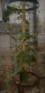 वृक्षारोपण, प्रकृति plantation, nature